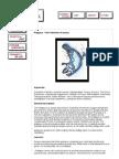 3Animal Energy - Platypus.pdf