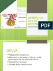 Derivados de Las Arterias