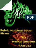 2-Pelvic Muscles &Sacral Plexus