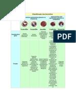 Análises Clínicas - Classificação de Leucócitos