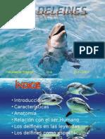 conferencia delfines
