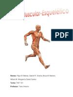 Sistema Músculo.pdf