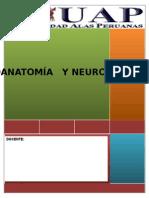 Trabajo Neuroanatomía y Neurofisiología123