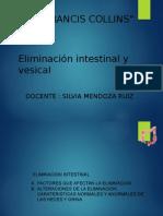 ELIMINACION INTESTINAL Y VESICAL.pptx
