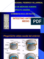 Intestino Anterior y Medio