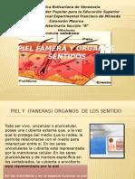 PIEL FAMERA Y ORGANOS  SENTIDOS.pptx