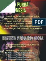 manusia-purba-indonesia
