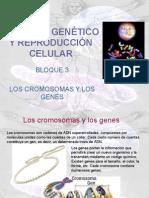 Material Genetico y Reproduccion Celular