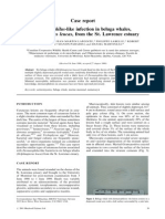 Dermatophilus-like Infection in Beluga Whales, Delphinapterus Leucas, From the St. Lawrence Estuary (Pages 59–62)