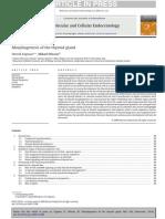 Molecular Morfgenesis de la glandula Tiroidea.pdf