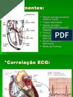 Anatomia Do Sistema de Condução.2