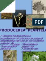 floare p.I (2)