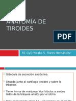 Anatomía de Tiroides y Glandulas Suprarrenales Yarahs