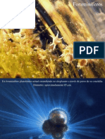 05 - Foraminíferos (1)