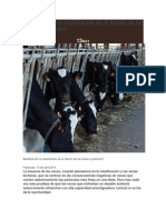 Beneficio de La Clasificación de La Ración de Las Vacas A