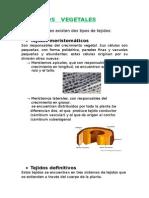 TEJIDOS   VEGETALES.docx