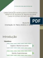 Caracterização Morfológica e Molecular de Mandioca