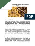 Biólogos peruanos congelan espermatozoides para salvar la miel de abejas