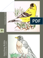 Birds of Carolina