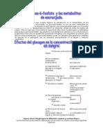 Glucogeno