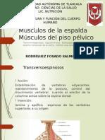 Musculos Piso Pelvico