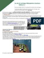 Guía Para El Cultivo de La Lechuga