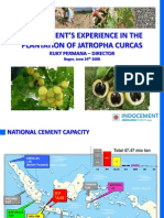 Indocement Experience in the Plantation of Jatropha Curcas
