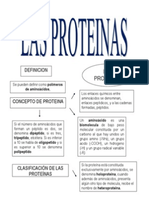 Las Proteínas Mapa Mental Péptido Colágeno