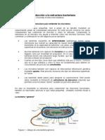 05 Est Bacterian A