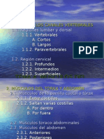 tema4-msculosdeltronco-110505102959-phpapp02.ppt