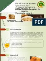 Extraccion de Aceite de Zapallo