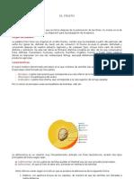 EL FRUTO.docx