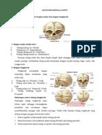 Anatomi Kepala Janin