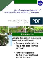 Genetic Variability of Vagetative Characters of Jatropha (Jatropha curcas L) accesions