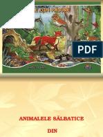 Animale Salbatice Din Romania