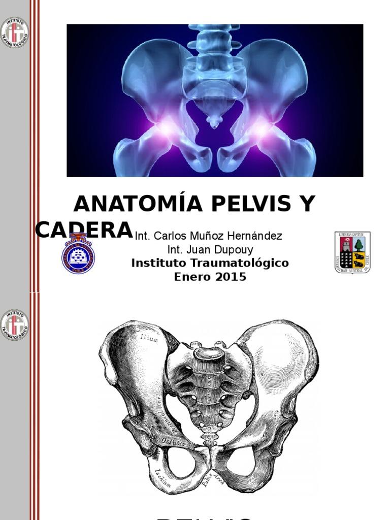 Anatomia Pelvis y Cadera