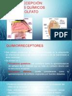 Quimiorecepción F.A