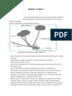 Bahan Pratikum Mikrobiologi 1&2 Modul 4.1