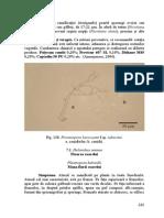 floarea_soarelui.pdf