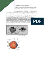 Anatomia Do Olho Humano