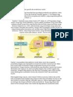 1. Pada Transfer Materi Genetik Dan Metabolisme