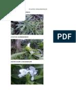 tarea_plantas