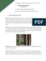 DoencasdoMilho2