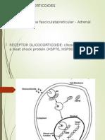 Glicocorticoides.ppt