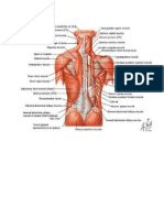 imagini bilant muscular.doc