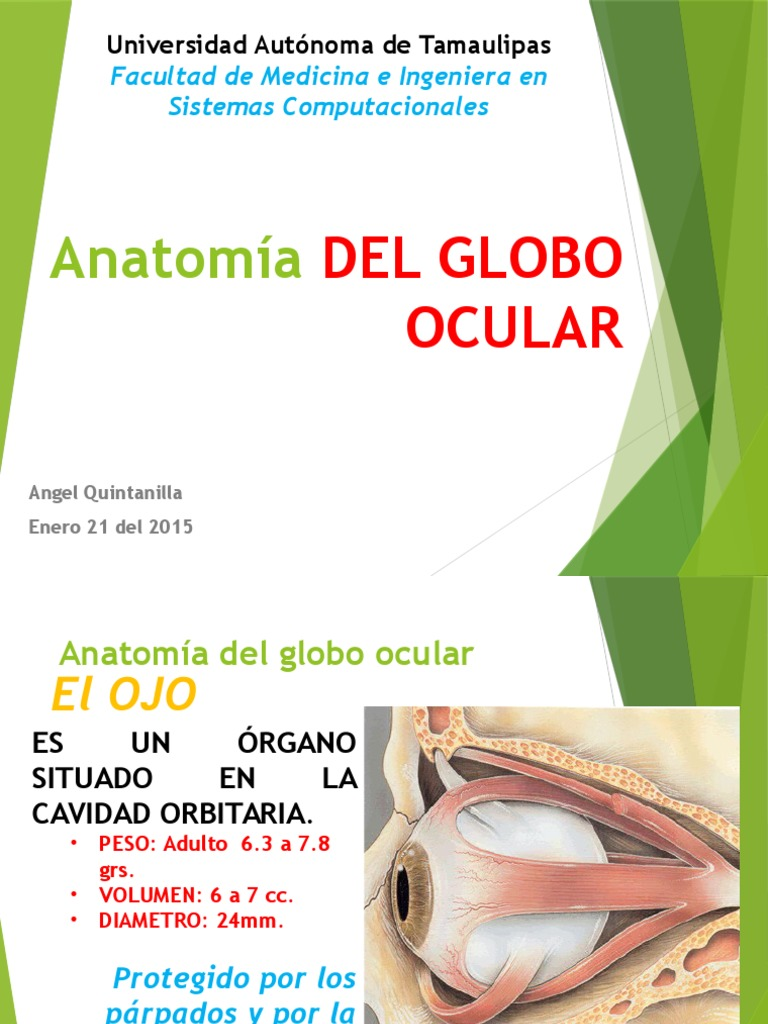 Anatomia y Fisiologia Del Globo Ocular