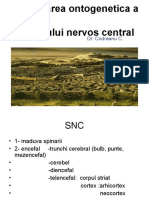 Anatomia Snc Curs 1
