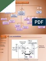 Acidos nuclicos