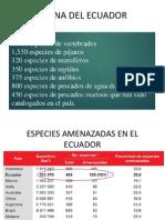 PISOS ZOOGEOGRÁFICOS DEL ECUADOR