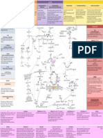 Biochemistry Metabolic Pathways & Pathologies